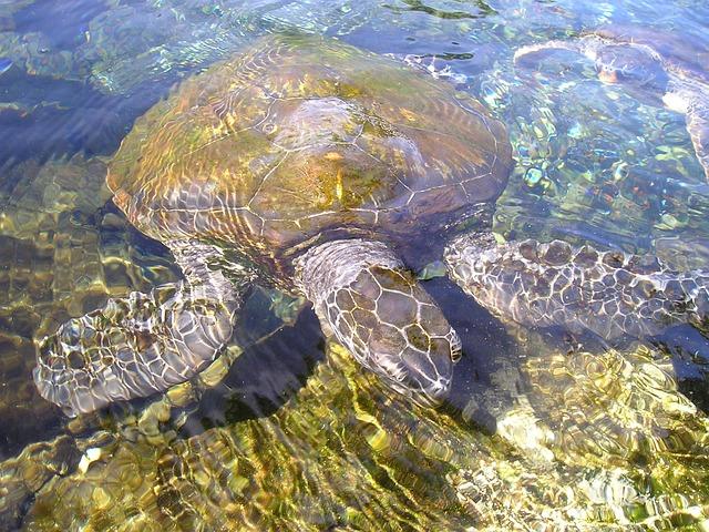 Turtle, Animal, Water Creature, Meeresbewohner