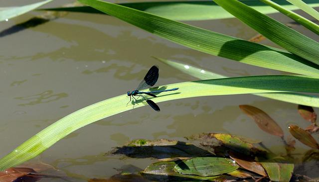 Dragonfly, Leaf, Water, Nature