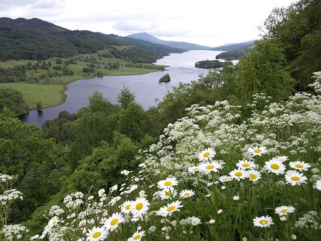Scotland, Loch Tummel, Queen's View, Flowers, Water