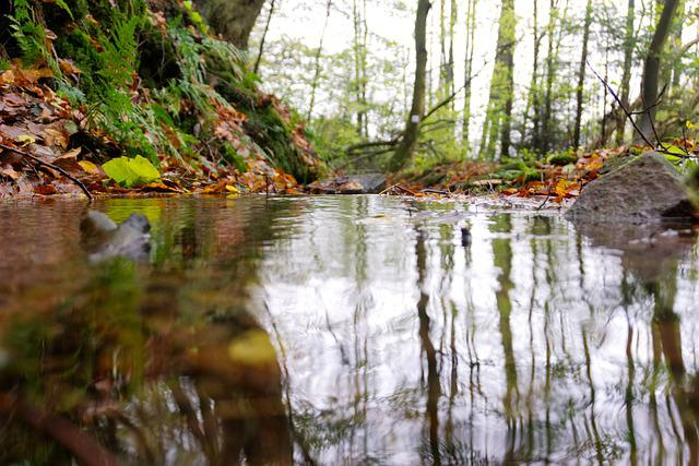Bach, Forest, Mirroring, Water, Nature, Landscape, Moss