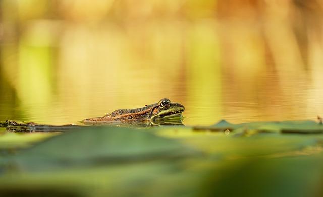 Frog, Water Frog, Animal, Amphibian, Pond, Nature