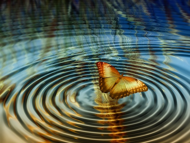 Collage, Rings, Butterfly, Water, Grain, Halme, Cereals