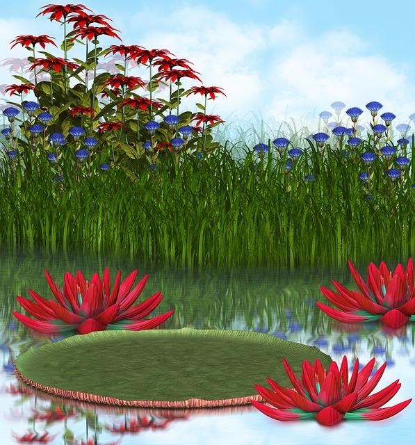 Water, Pond, Nature, Lake, Landscape, Summer, Outdoor