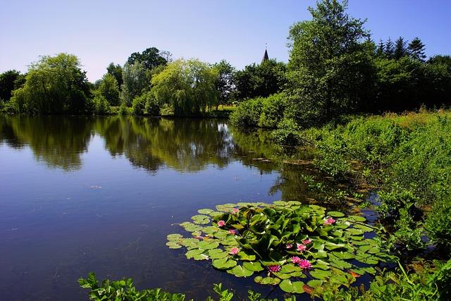 Lake, Trees, Water Lilies, Idyllic, Sky, Mood, Rest