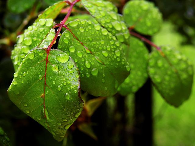 Drip, Water, Drop Of Water, Close, Liquid, Rain, Leaves