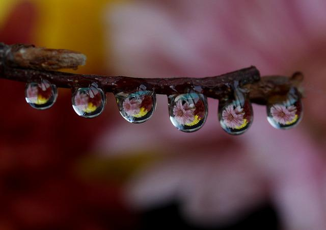 Drops, Wet, Dew, Plant, Water, Macro