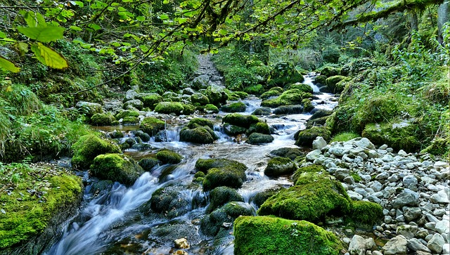 River, Torrent, Water, Spun, Fall, Hdr, Nature, Forest