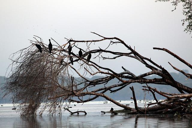 Water, Bird, Tree, Nature, Lake, Summer, White