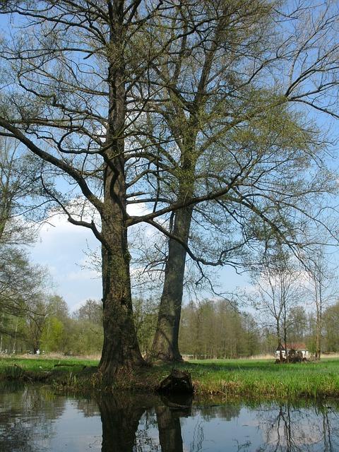 Spreewald, Water, Nature, Landscape, River, Spree, Tree