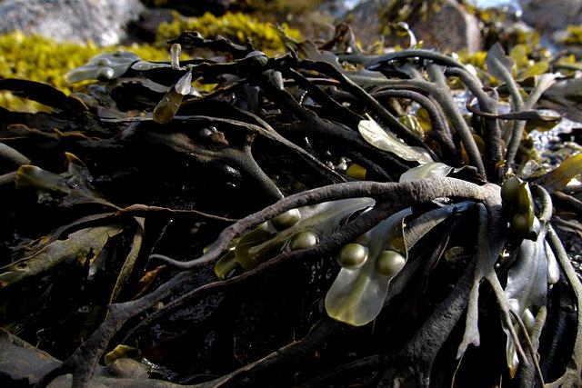 Seaweed, Sea, Marine, Algae, Water, Ocean, Nature