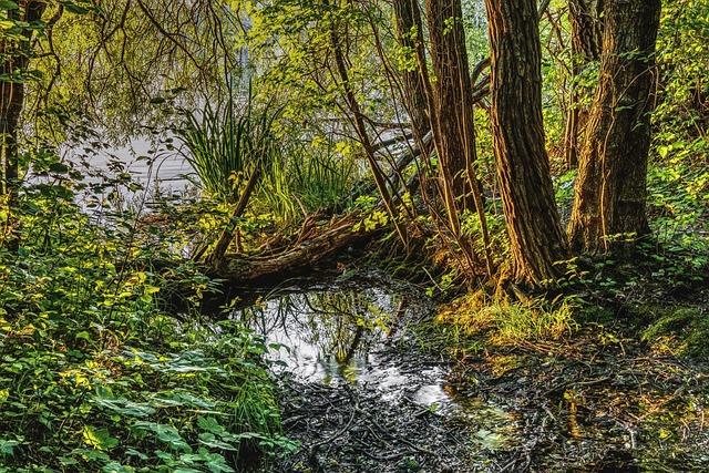 Swamp, Water, Mirroring, Trees, Pond, Nature