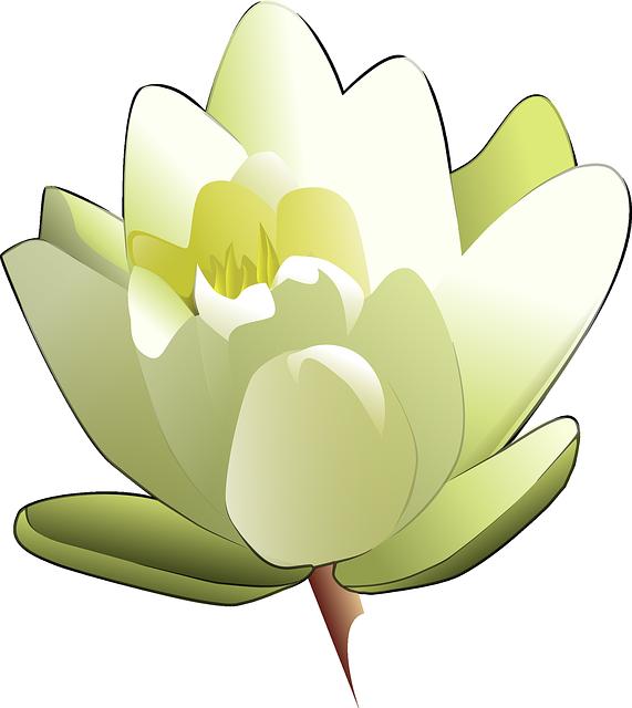 Lily, White, Lotus, Water, Rose, Nenuphar, Drawing
