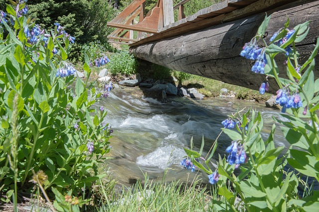 Stream, Spring, Water, Outdoor