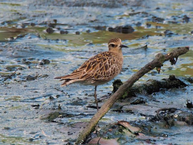 Migratory Bird, Seasonal, Visitor, Outdoor, Water