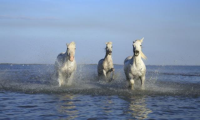Horse, White Horse, Mane, Mud, Paw, Shoe, Water Plan