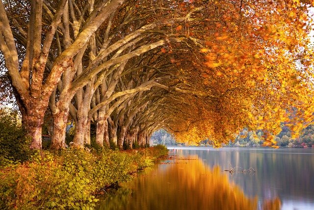 Autumn, Lake, Plane Trees, Nature, Landscape, Water