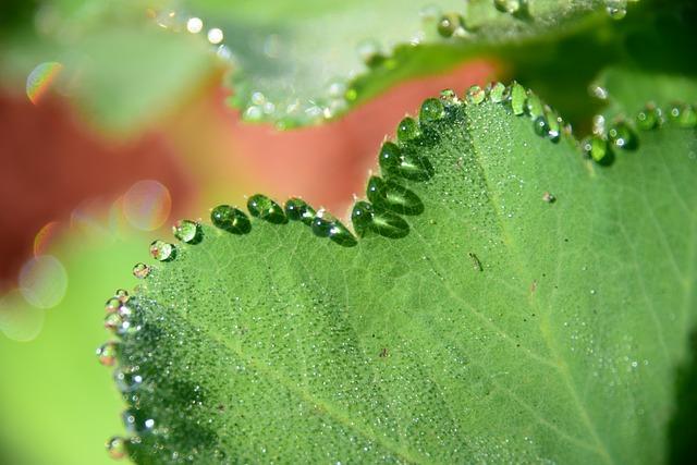 Macro, Nature, Drop, Water, Plants