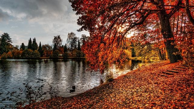 Autumn, Sun, Pond, Water