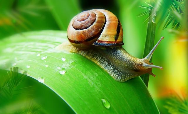 Wstężyk Huntsman, Leaf, Water, Rain, Molluscum, Slide