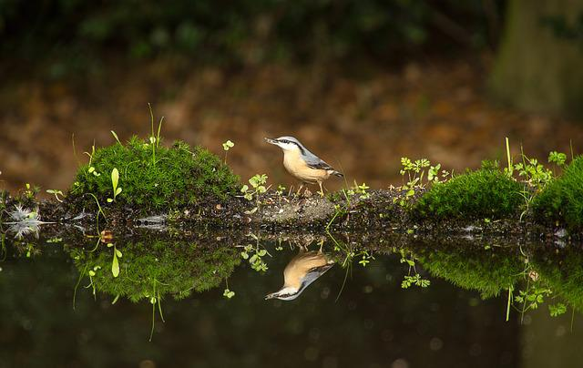 Bird, Nature, Reflection, Water, Forest, Birds