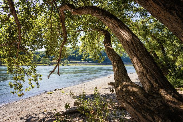River, Bank, Rhine, Tree, Landscape, Nature, Water