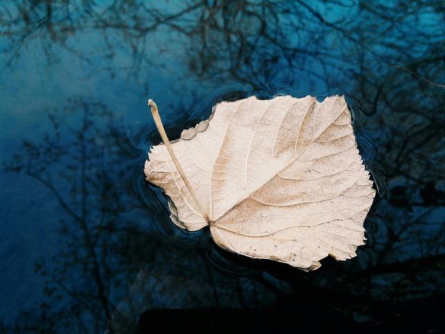 River, Sheet, Autumn, Sky, Water, Autumn Day