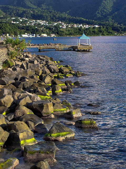 Caribbean, Domenica, Sea, Stones, Water, Seaweed