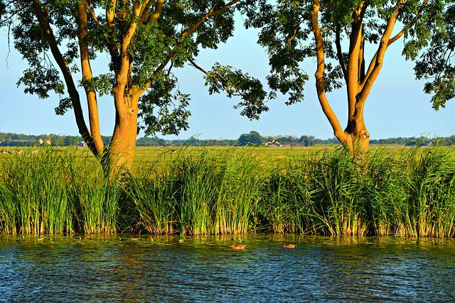 Water, River, Shore, Rushes, Trees, View