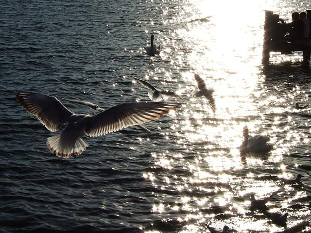 Terns, Starnberger See, Water