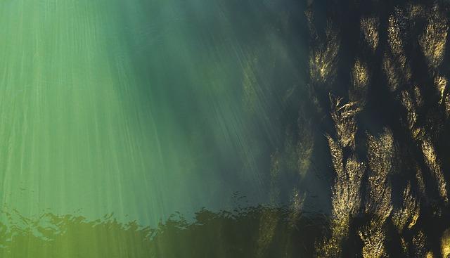Underwater, Top View, Water Surface, Seaweed