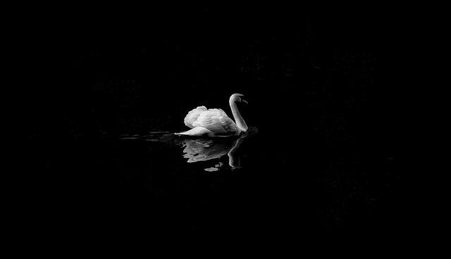 Animal, Bird, Lake, Reflection, Swan, Water