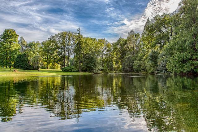 Nature, Water, Tree, Landscape, Lake