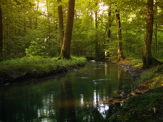 Forest, Fog, Tree, Glade, Bach, Water, Mirror Sheets