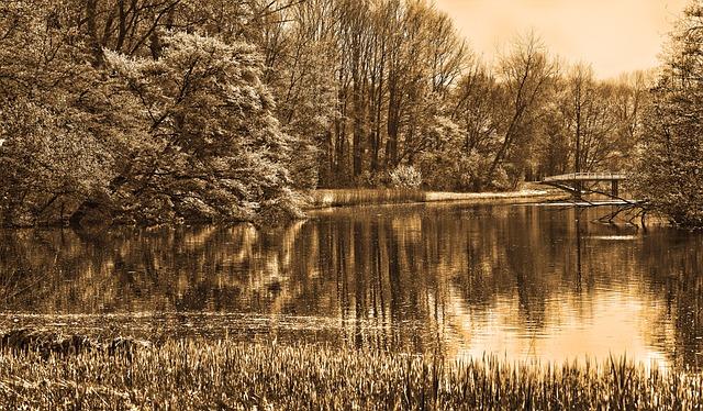 Pond, Water, Trees, Bridge, Reflections, Landscape