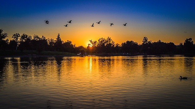 Park, Day, Ducks, Lake, Sun, Trees, Water, Sunset, Long