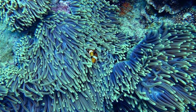 Water, Corals, Underwater, Clear Water, Clown Fish