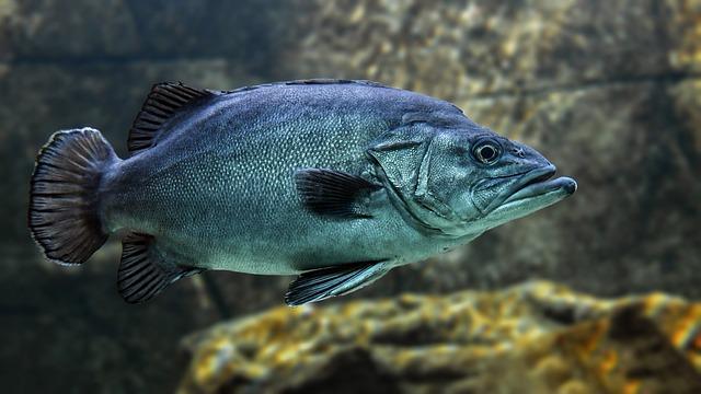 Fish, Swim, Water, Animal, Underwater