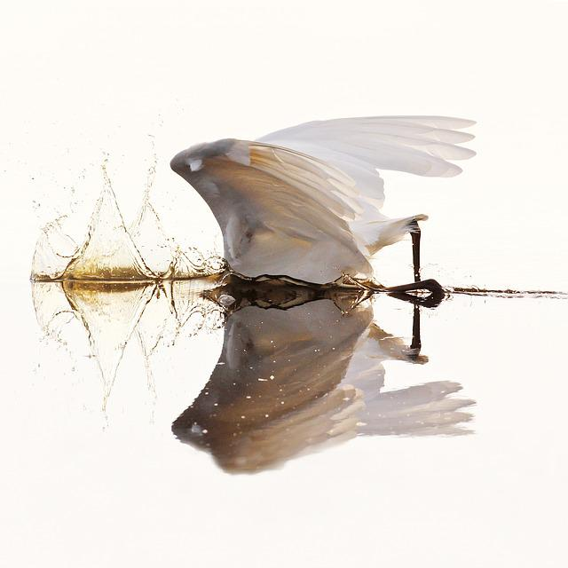 Egret, Waterfowl, Bird, Mirror, Water, Lakes, More