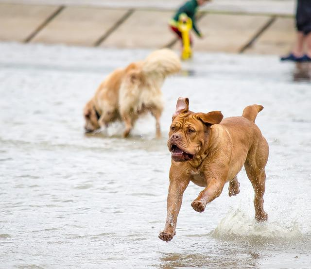Wildlife Photography, Pet Photography, Dogs, Water