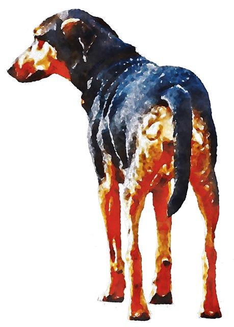 Dogs, Dog, Doberman, Watercolor, Oekaki, Pet, Animal