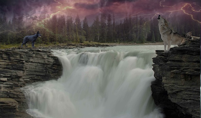 Wolf, Waters, River, Landscape, Waterfall, Nature