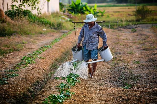 Watering, Watering Can, Man, Vietnam, Farmer