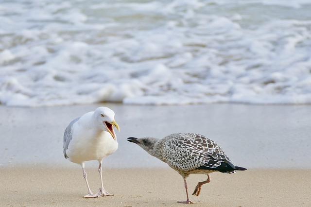 Bird, Sea, Beach, Waters, Animal, Animal World, Bill