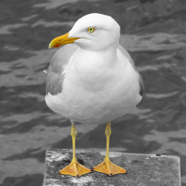 Bird, Seagull, Waters, Animal World, Bill, Sea