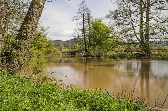 Nature, Waters, Tree, Landscape