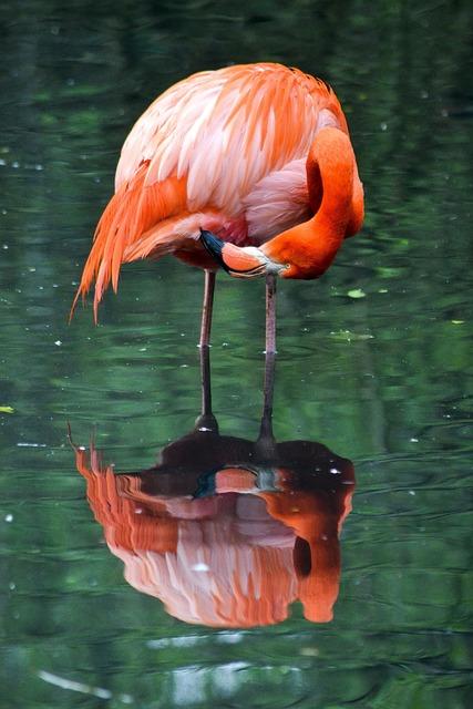Waters, Nature, Flamingo