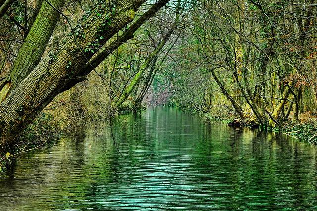 Nature, Waters, River, Tree, Wood, Reflection