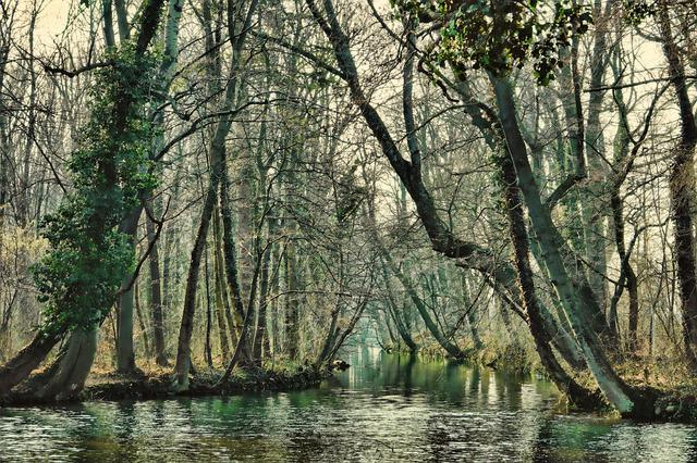 Tree, Wood, Winter, River, Nature, Waters, Landscape