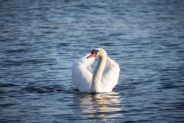 Waters, Bird, Swan, Nature, Lake