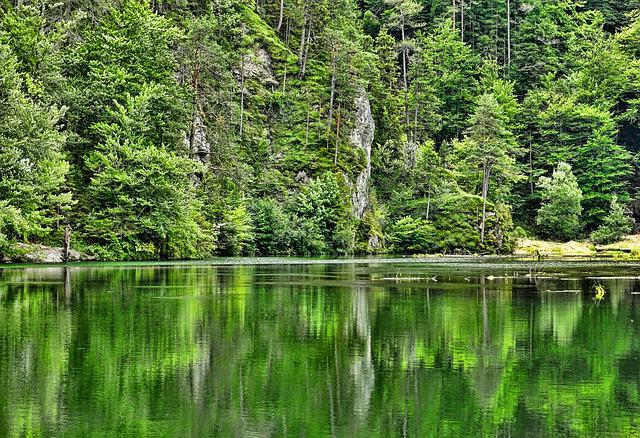 Nature, Forest, Waters, Mountain Forest, Wood, Summer